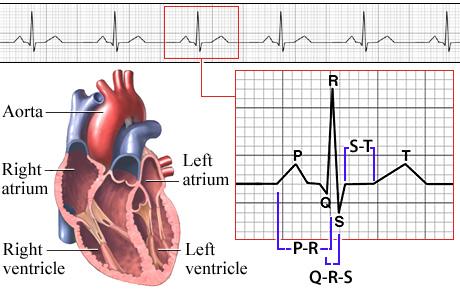 kursus EKG 2009